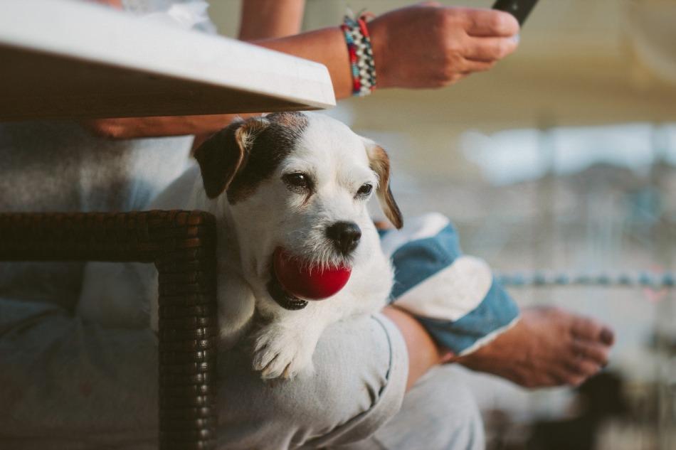 Lo que una mascota puede hacer por ti