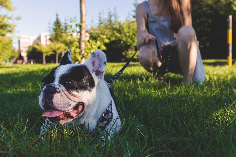 Una mascota mejora tu condición física