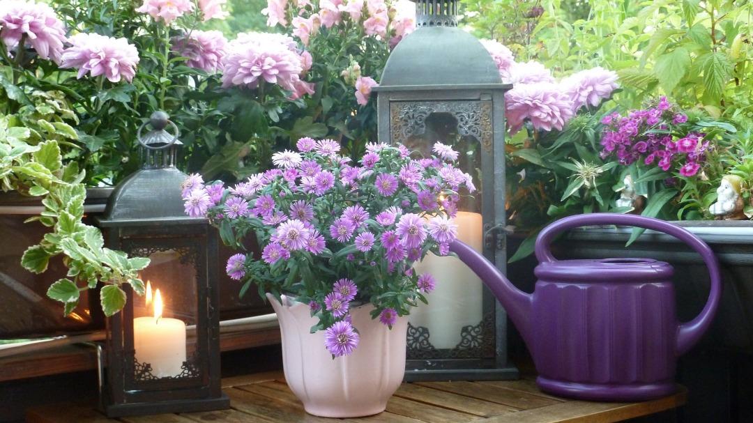Plantas que limpian el aire de nuestra casa