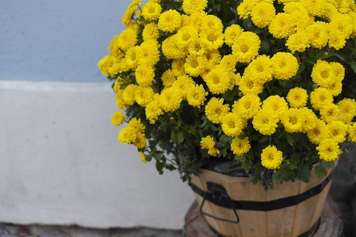 Planta que limpian el aire de nuestras casas