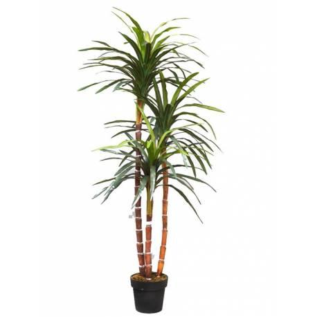 Plantas que limpian el ambiente